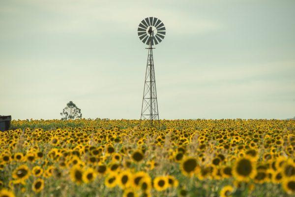 Le climat est-il un bien commun ?